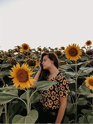 Klaudia K -  - Sunflowers